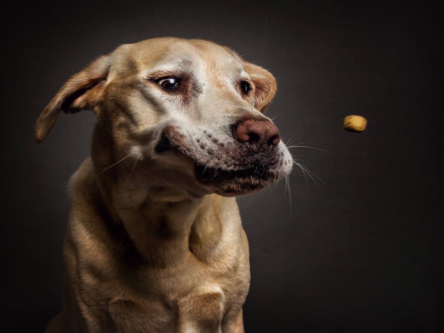Фотограф зробив приголомшливі знімки собак з їжею - фото 6