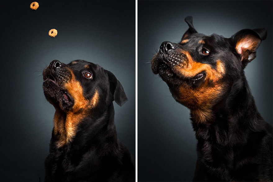 Фотограф зробив приголомшливі знімки собак з їжею - фото 7