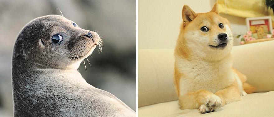 ТОП-5 кумедних тюленів, які надзвичайно схожі на собак - фото 3