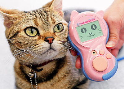 Підвіска на дупу і облизувач: ТОП-5 кумедних девайсів для котів - фото 3