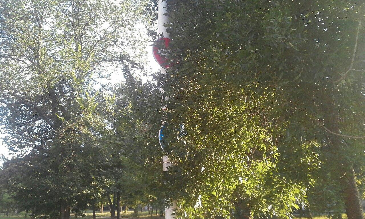 У Миколаєві ліани заплели дорожні знаки - фото 3
