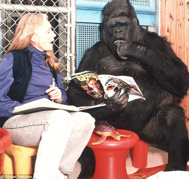 Історія 40-річної дружби між жінкою та горилою вразила Мережу - фото 2