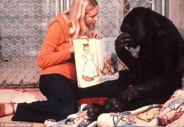 Історія 40-річної дружби між жінкою та горилою вразила Мережу - фото 4