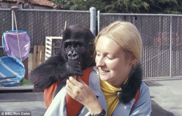 Історія 40-річної дружби між жінкою та горилою вразила Мережу - фото 1