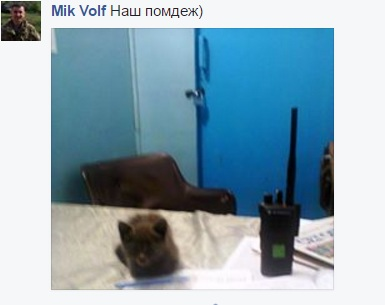 За що котам в АТО треба поставити пам'ятник-7 - фото 13