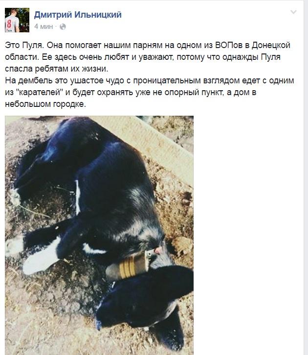 Чим займаються на Донбасі найкращі друзі бійців АТО - 6 - фото 9
