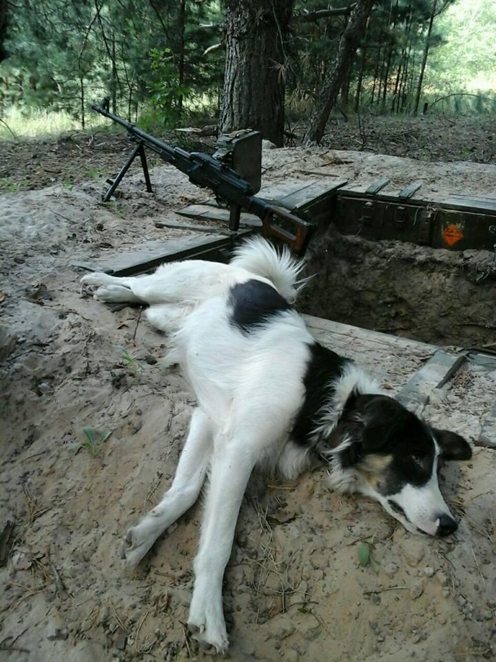 Чим займаються на Донбасі найкращі друзі бійців АТО - фото 16