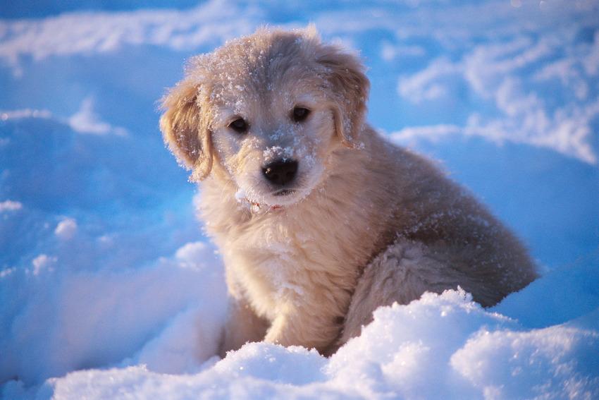Як тварини радіють снігу - фото 7