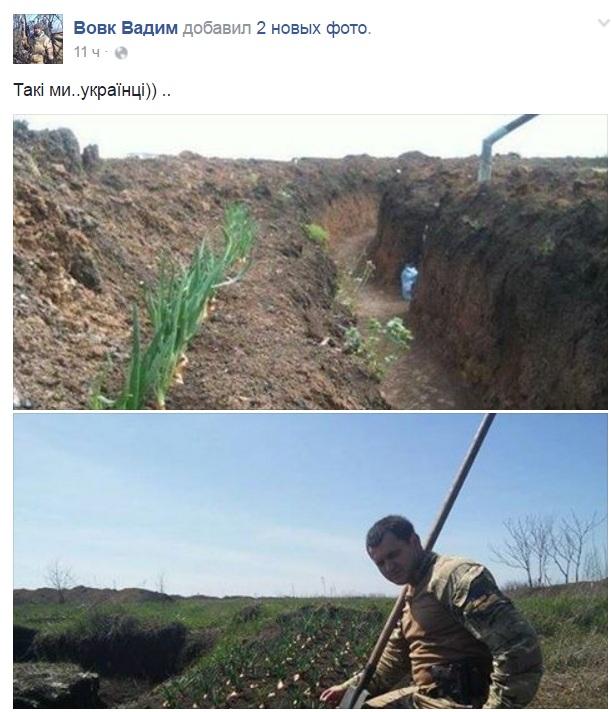 """Як """"колоради"""" знищують картоплю бійців АТО - фото 4"""