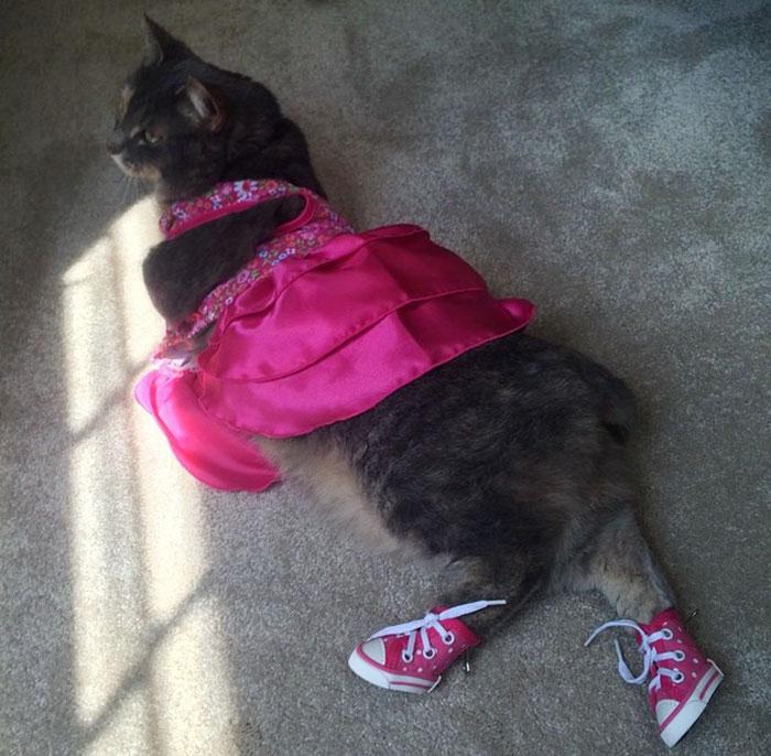 Як хлопець взяв на випускний кішку замість дівчини  - фото 2