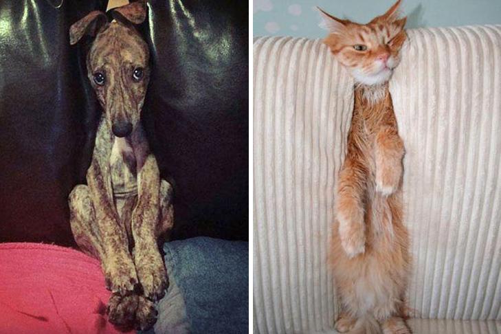 30 фото забавних тварин, які потрапили у халепу - фото 23