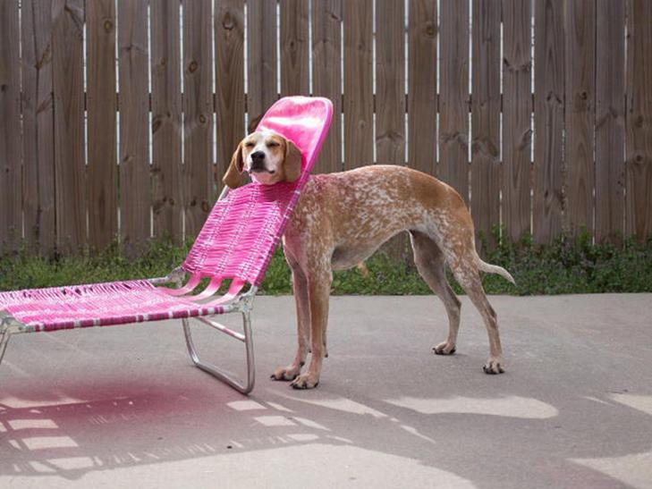 30 фото забавних тварин, які потрапили у халепу - фото 15
