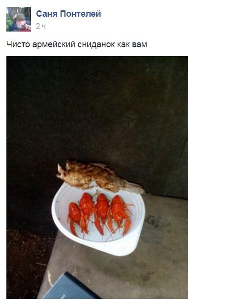 Атошна їжа: який зв'язок між кішкою та салатом олів'є - фото 7
