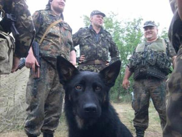 Чим займаються на Донбасі найкращі друзі бійців АТО-4 - фото 10