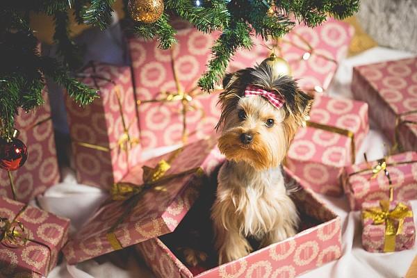 ТОП-20 фото, які створять вам новорічний настрій - фото 12