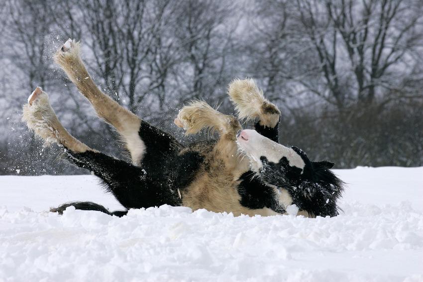Як тварини радіють снігу - фото 6