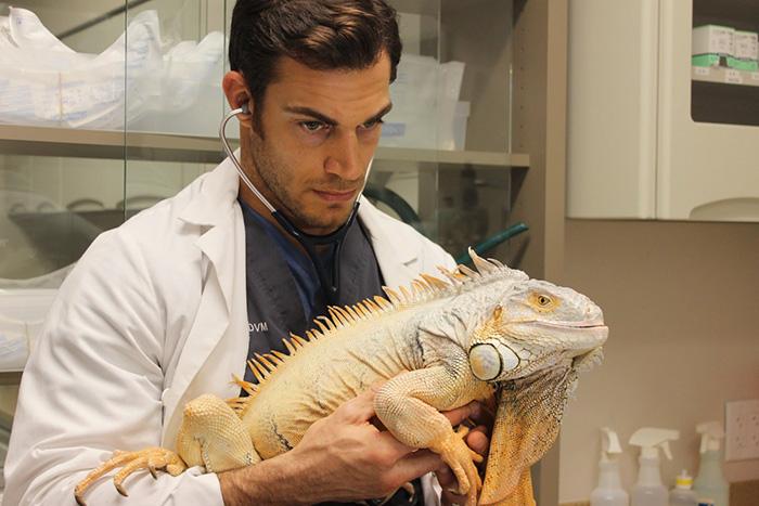 Як виглядає найгарячіший ветеринар, заради якого ви б точно завели тваринку - фото 4