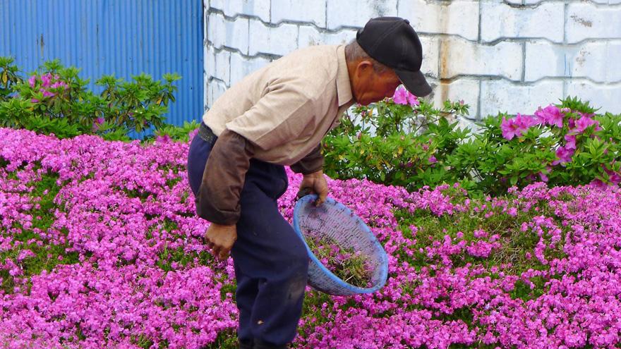 Як закоханий чоловік виростив тисячі квітів на подвір'ї для сліпої дружини - фото 3