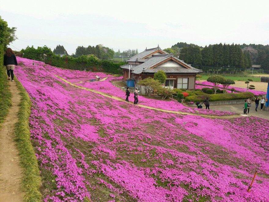 Як закоханий чоловік виростив тисячі квітів на подвір'ї для сліпої дружини - фото 2
