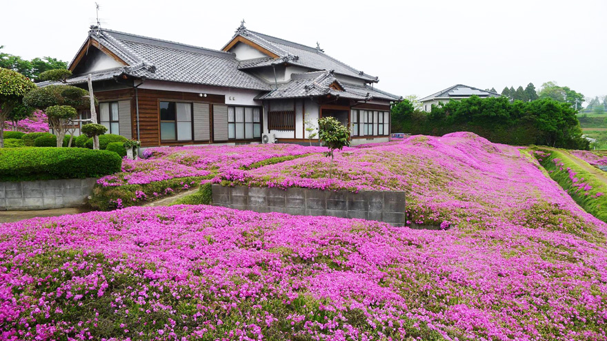 Як закоханий чоловік виростив тисячі квітів на подвір'ї для сліпої дружини - фото 1