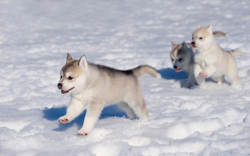 Як тварини радіють снігу - фото 5