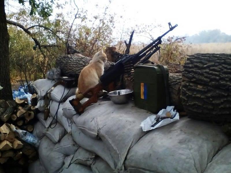 Мімішні бійці: Коти-кулеметники в АТО - фото 5