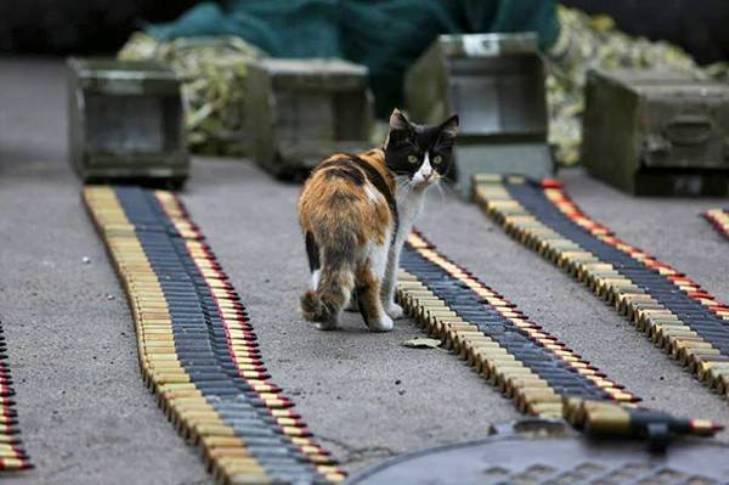 За що котам в АТО треба поставити пам'ятник-5 - фото 9