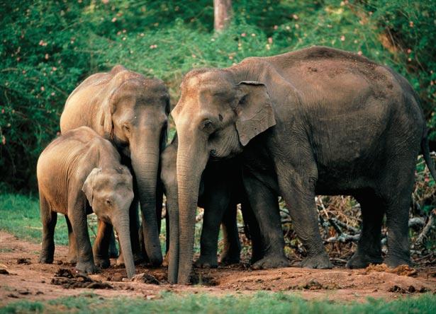 День слона (ФОТО) - фото 9