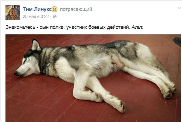 Чим займаються на Донбасі найкращі друзі бійців АТО-4 - фото 1