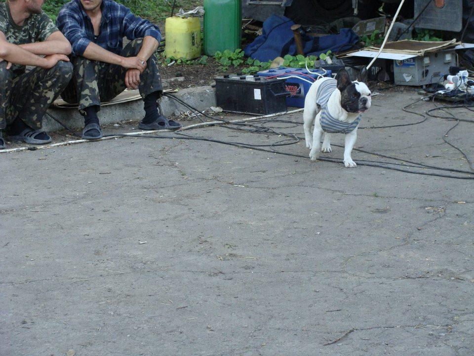 Чим займаються на Донбасі найкращі друзі бійців АТО - фото 14