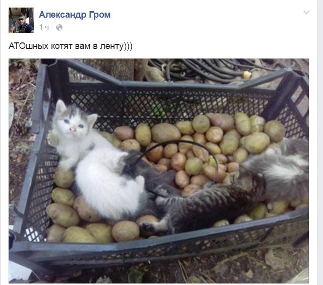 За що котам в АТО треба поставити пам'ятник-7 - фото 14