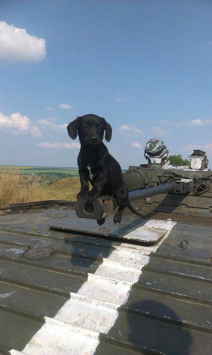 Чим займаються на Донбасі найкращі друзі бійців АТО - 7 - фото 11