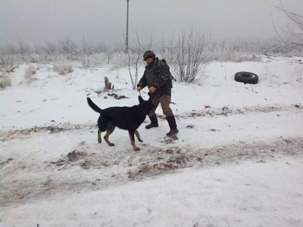 Чим займаються на Донбасі найкращі друзі бійців АТО-4 - фото 15