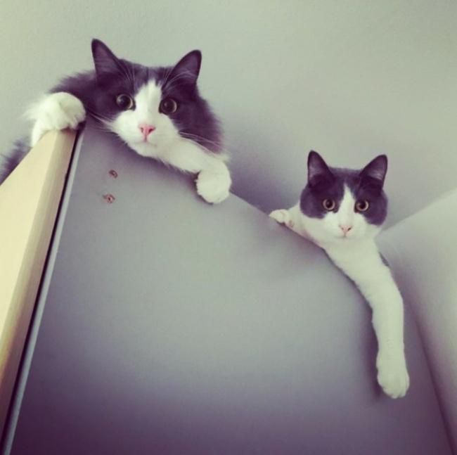 ТОП-10 ознак, що у вас вдома живе двоє котів - фото 10