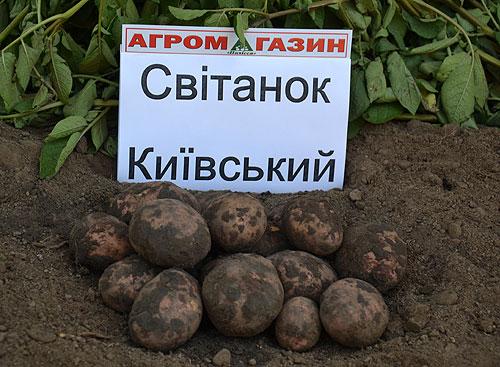 ТОП-10 країн, які найбільше наминають картоплю - фото 4