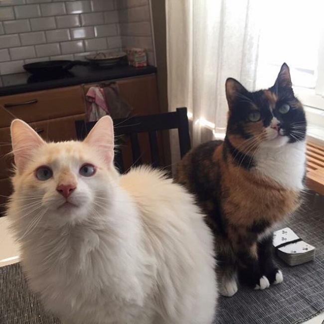ТОП-10 ознак, що у вас вдома живе двоє котів - фото 9