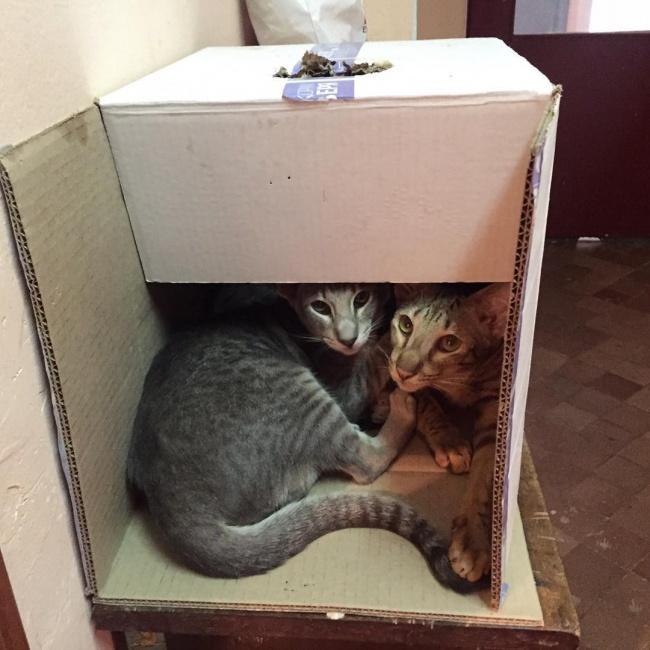 ТОП-10 ознак, що у вас вдома живе двоє котів - фото 4
