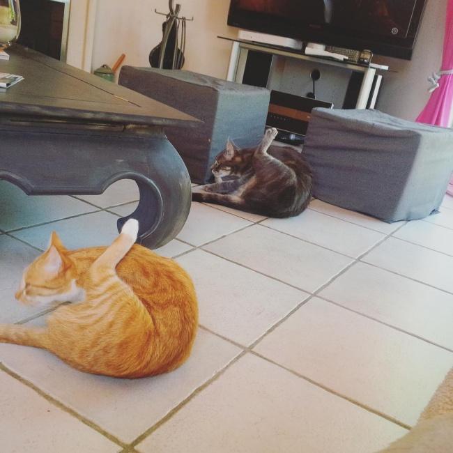 ТОП-10 ознак, що у вас вдома живе двоє котів - фото 3