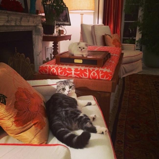 ТОП-10 ознак, що у вас вдома живе двоє котів - фото 2