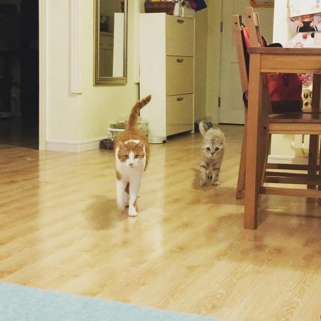 ТОП-10 ознак, що у вас вдома живе двоє котів - фото 8