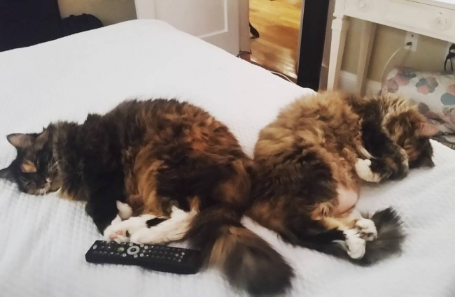 ТОП-10 ознак, що у вас вдома живе двоє котів - фото 7