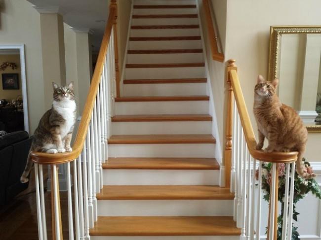 ТОП-10 ознак, що у вас вдома живе двоє котів - фото 5
