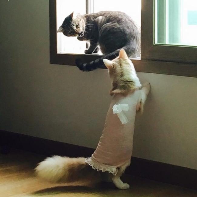 ТОП-10 ознак, що у вас вдома живе двоє котів - фото 1