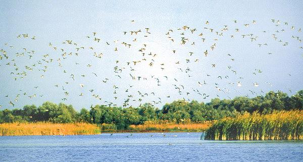 Подорожі Україною: ТОП-10 вражаючих озер - фото 19
