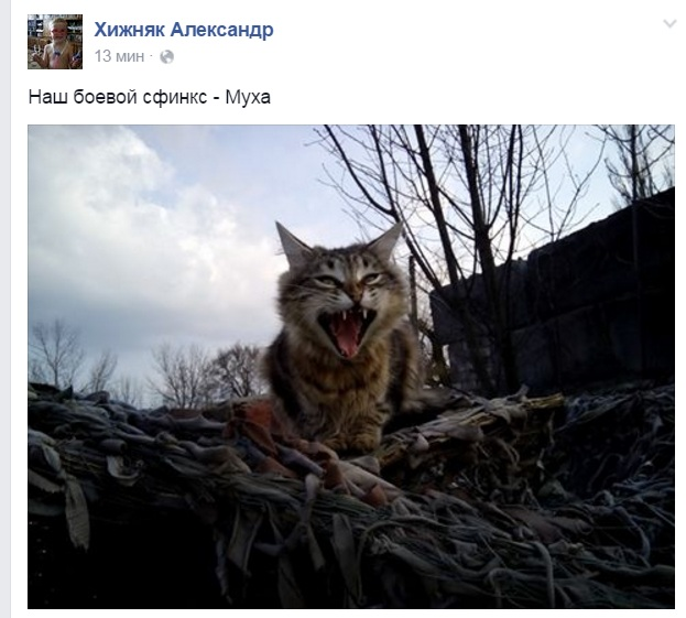 За що котам в АТО треба поставити пам'ятник-4 - фото 13