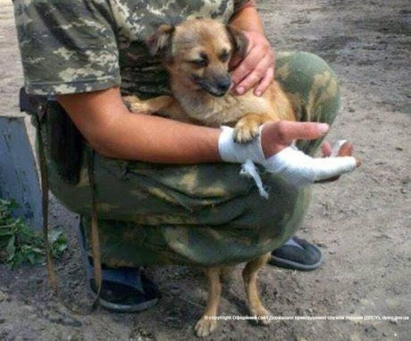 Чим займаються на Донбасі найкращі друзі бійців АТО - 7 - фото 12