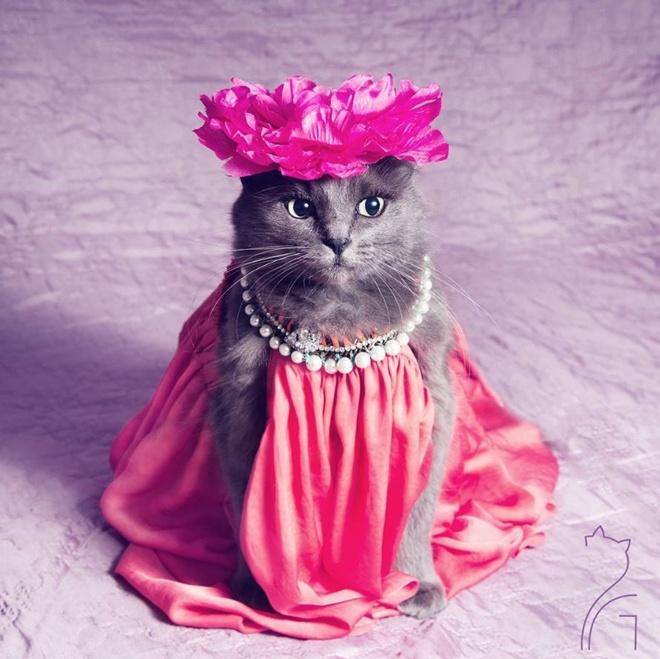 Як кішка з кольоровими віями стала королевою моди - фото 4