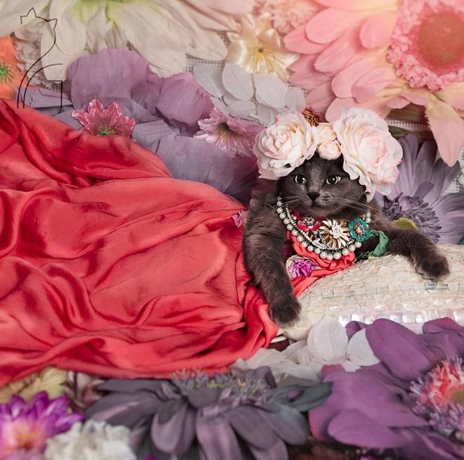 Як кішка з кольоровими віями стала королевою моди - фото 2