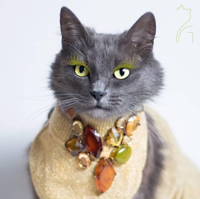 Як кішка з кольоровими віями стала королевою моди - фото 1