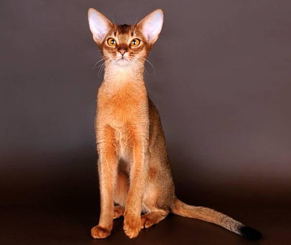 Котофілія у XIX столітті: Як раніше обожнювали котиків - фото 1
